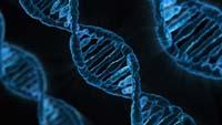 FISH analysis and DNA fragmentation test
