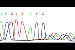 ERA test - Endometrial Receptivity Analysis