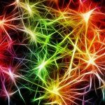 stem cells menopause